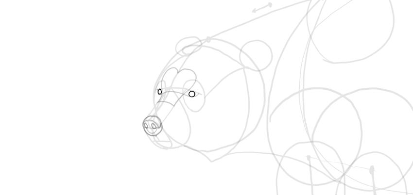 bear drawing eyes