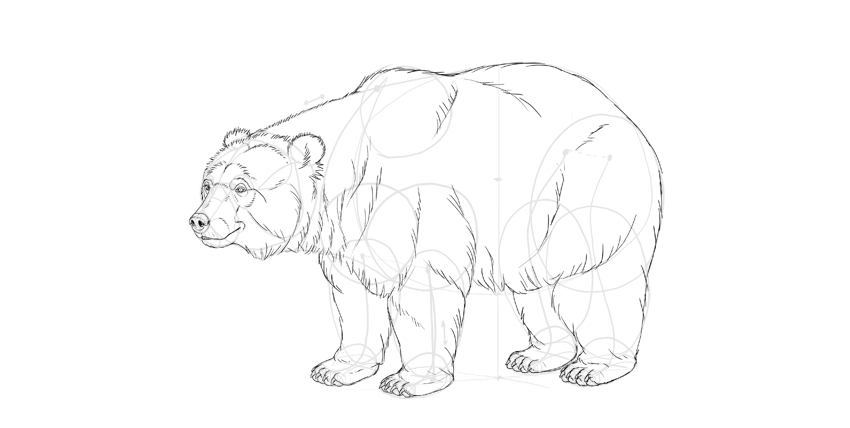 bear drawing fur finished