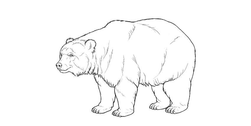 bear drawing dark outline