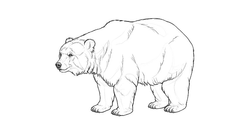 bear drawing plan shading