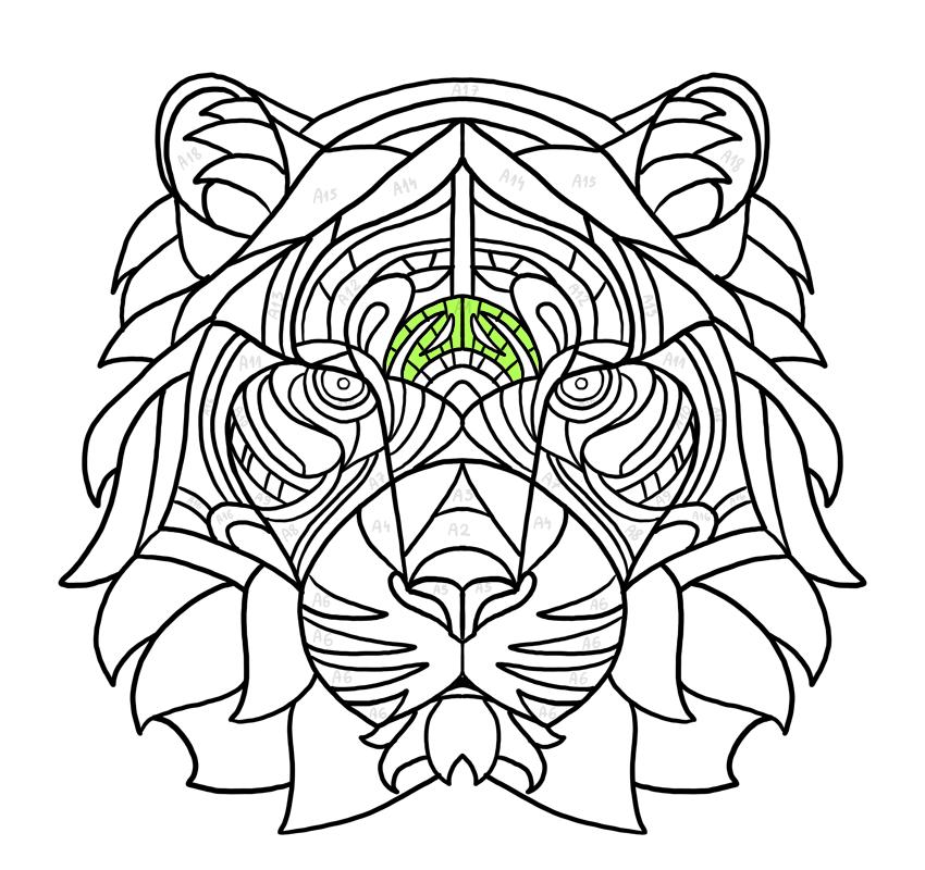 lines between the brow