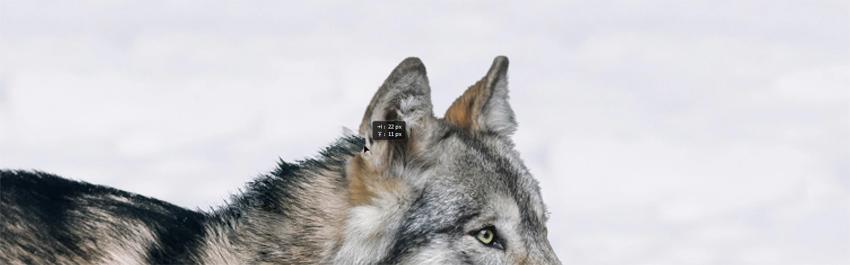 fixing fur
