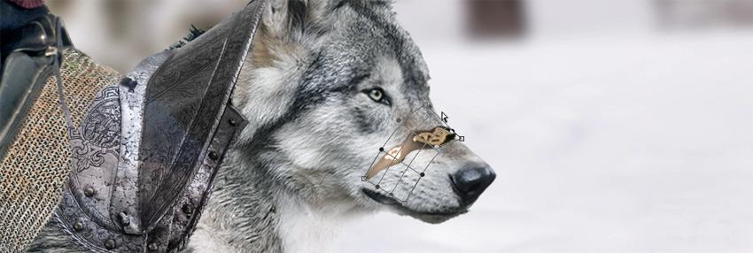 paste and wrap around wolfs muzzle