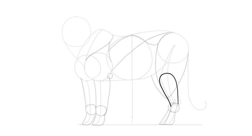 draw the calf