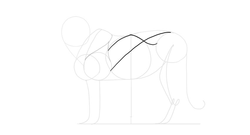 add torso muscles