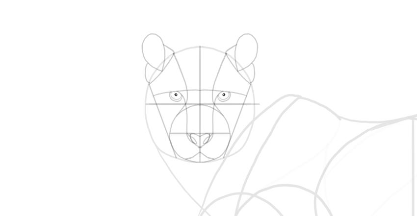 draw the pupils