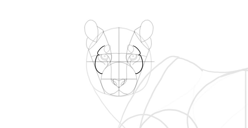 draw the cheekbones