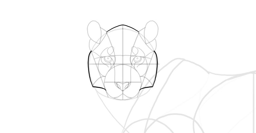 tiger face shape