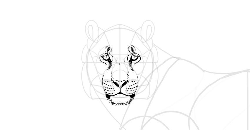 draw the tiger muzzle