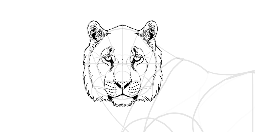 draw the tiger face