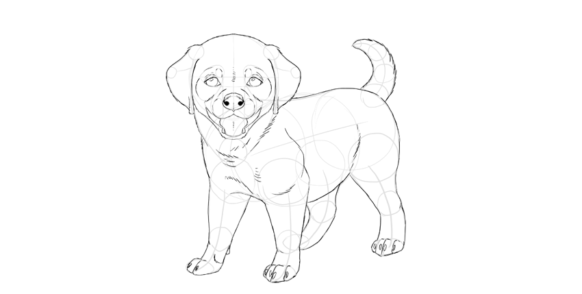 puppy final outline