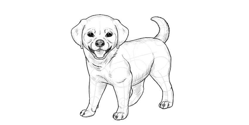 puppy shading