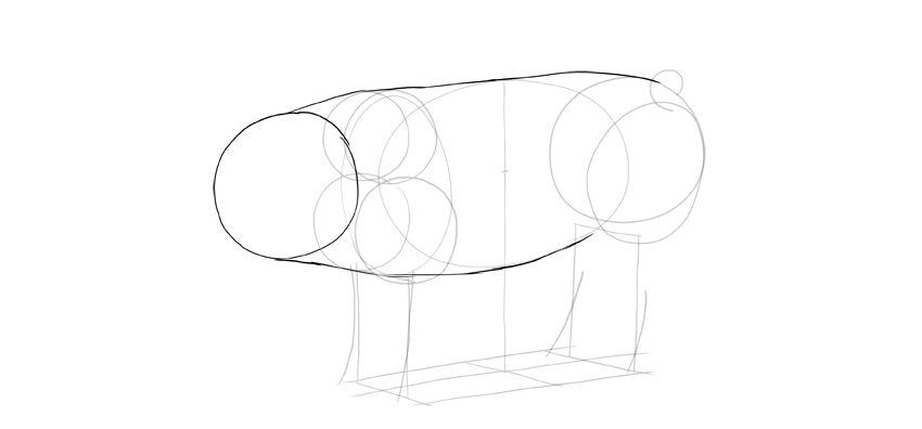 sketch the outline of pig head and body
