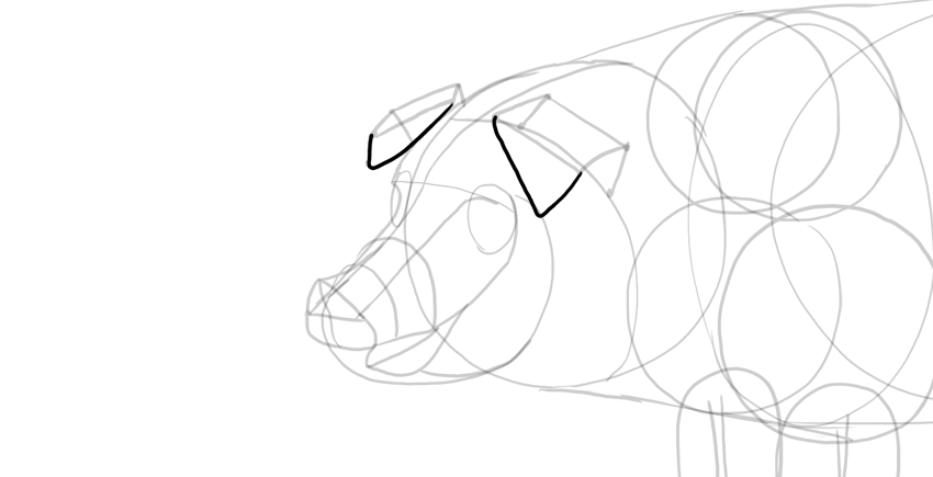 draw pig ears tips