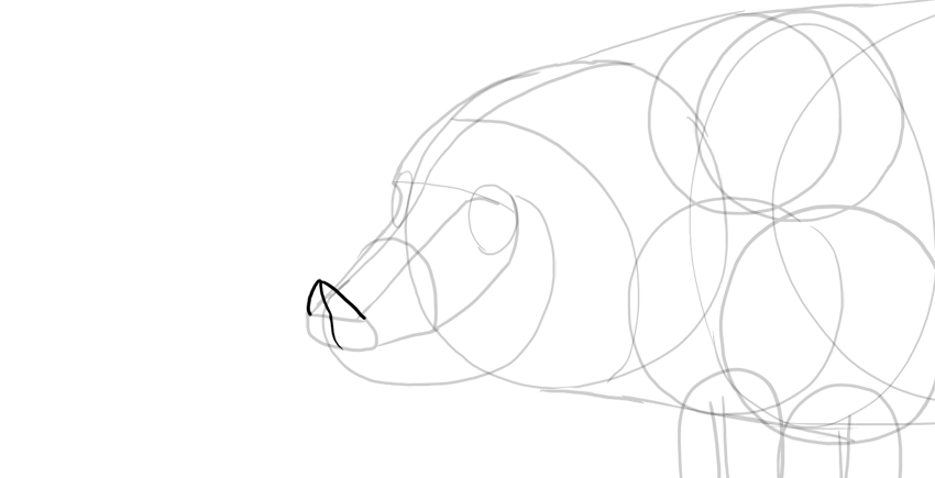 draw the snout disc
