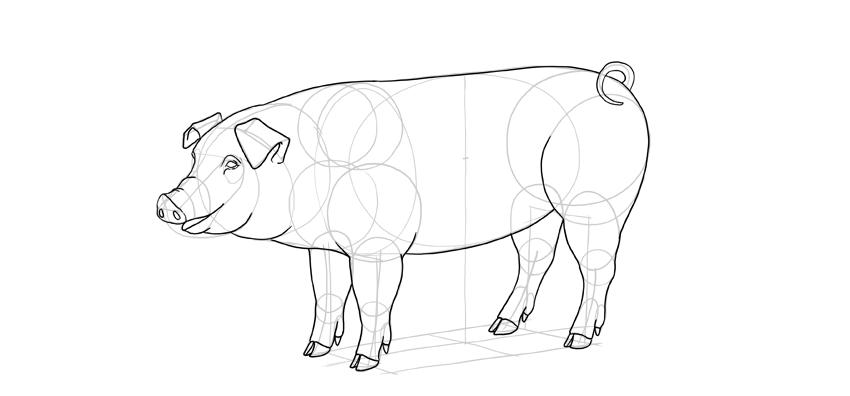 outline pig body