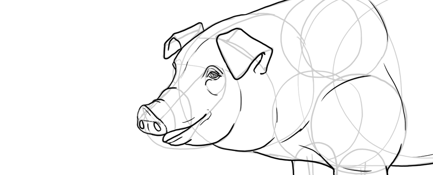 draw pig face