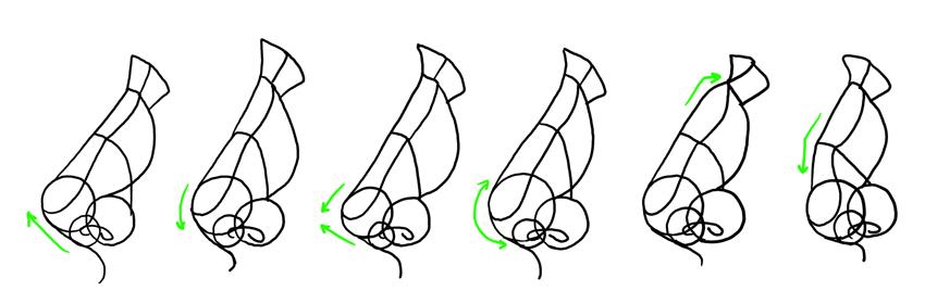 nose shapes side