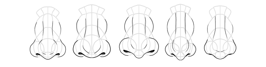 nose shapes front