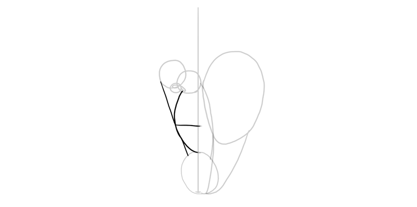 shape of mouth in profile