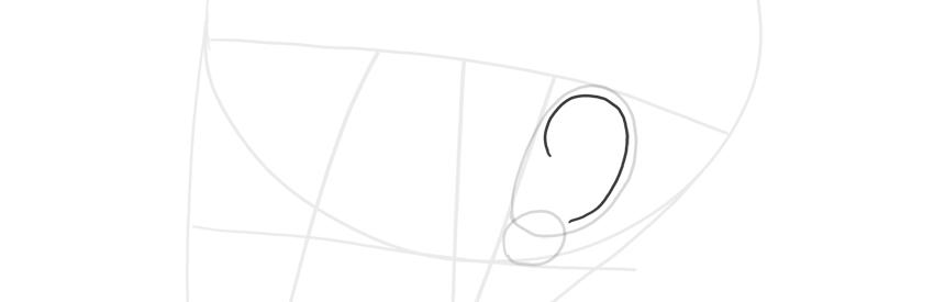 ear side view helix curve