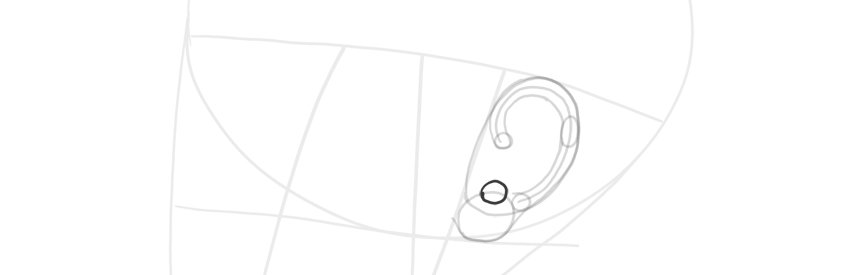 ear side view antitragus