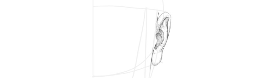how to draw ear front view