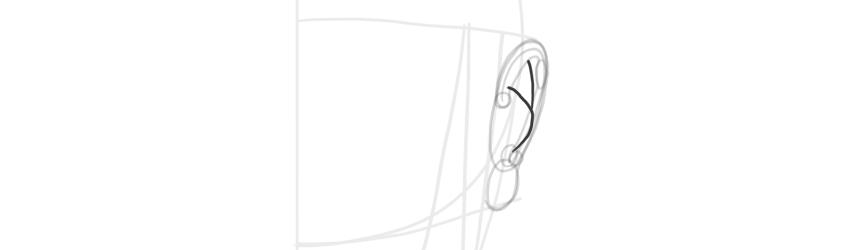ear front view antihelix curve