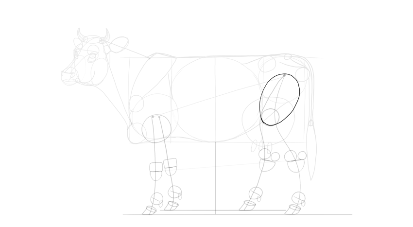draw cow thigh