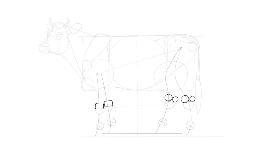 draw cows bony landmarks in legs