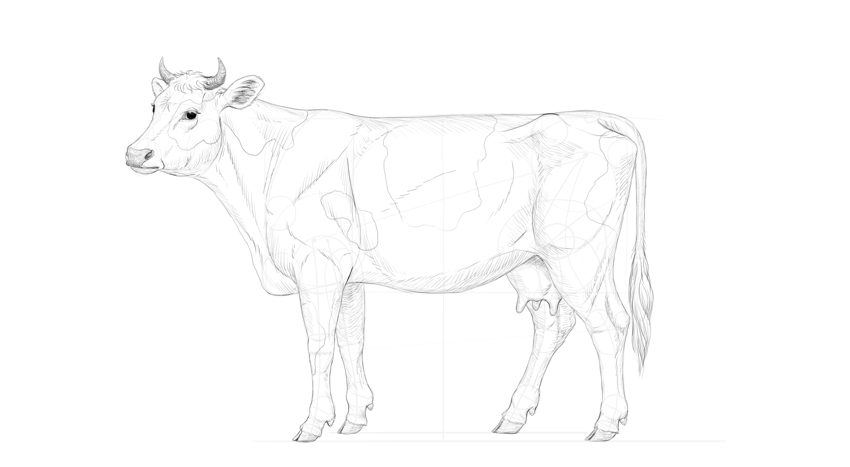 shade the cow