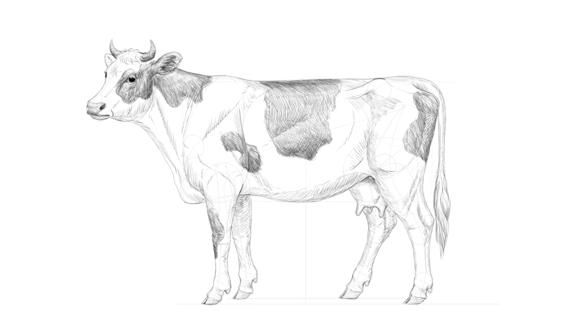 darken cow pattern