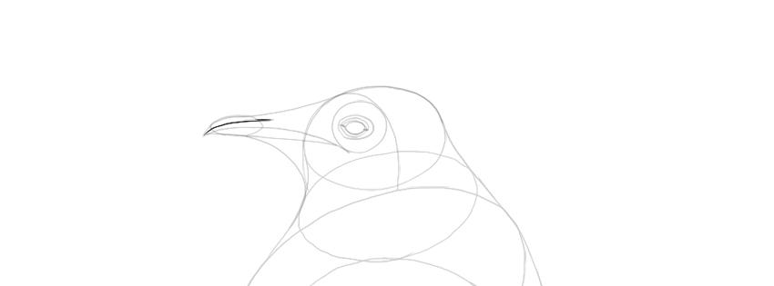 penguin beak drawing
