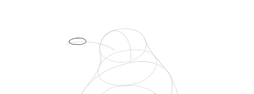sketch the beak shape