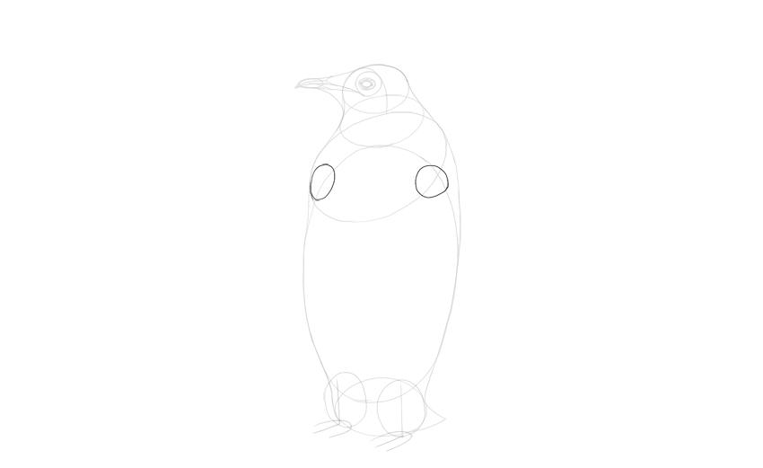 sketch oval shoulders