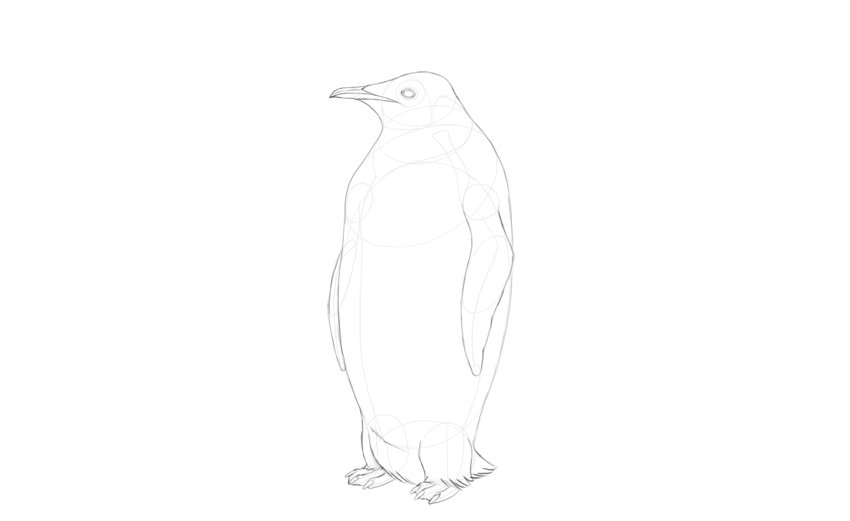 outline whole penguin body