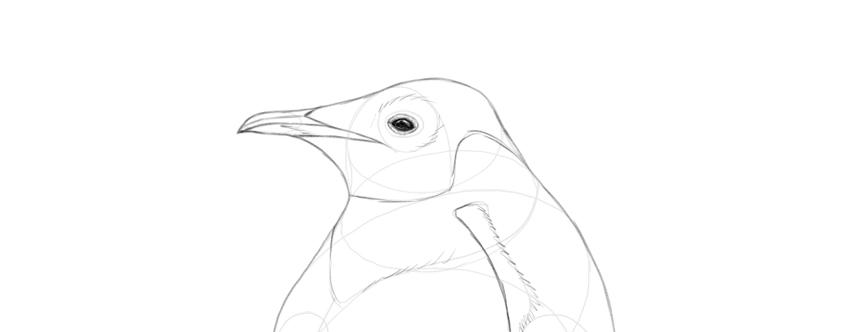 draw penguin eye