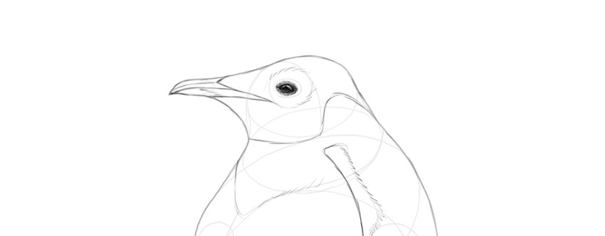 shade penguin eye