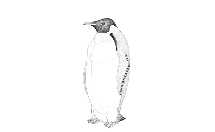 draw penguin pattern