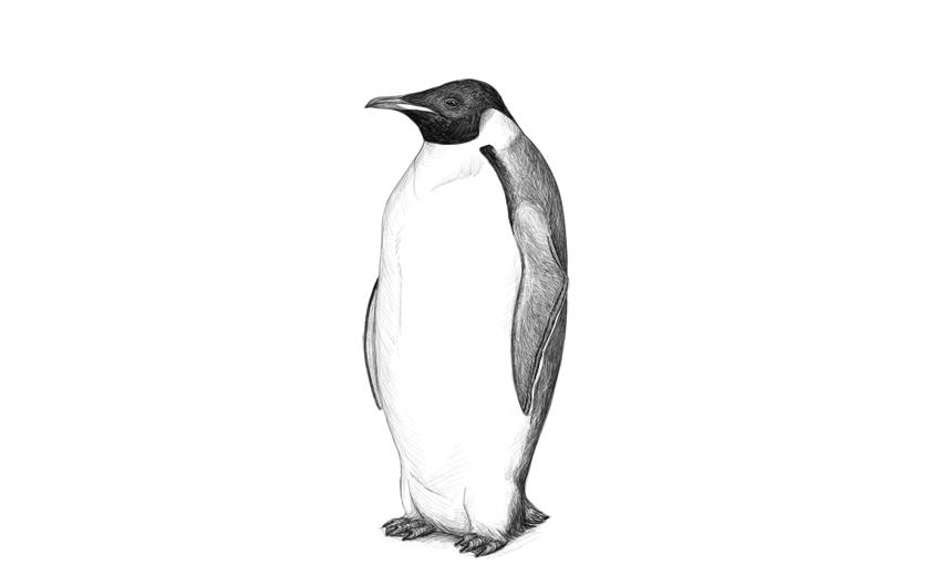 finish penguin drawing