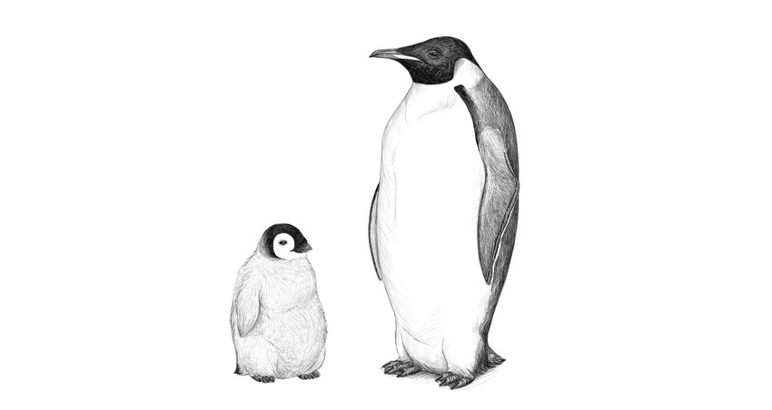 how to draw penguin step by step