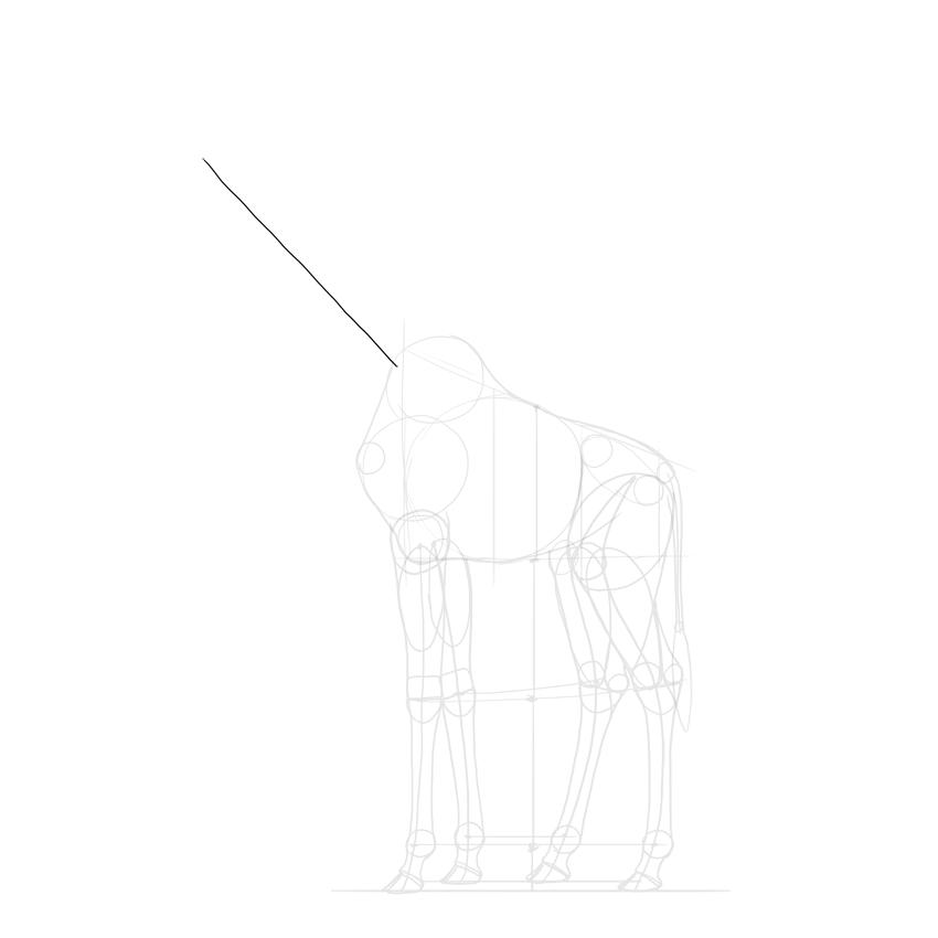 establish length of giraffe neck