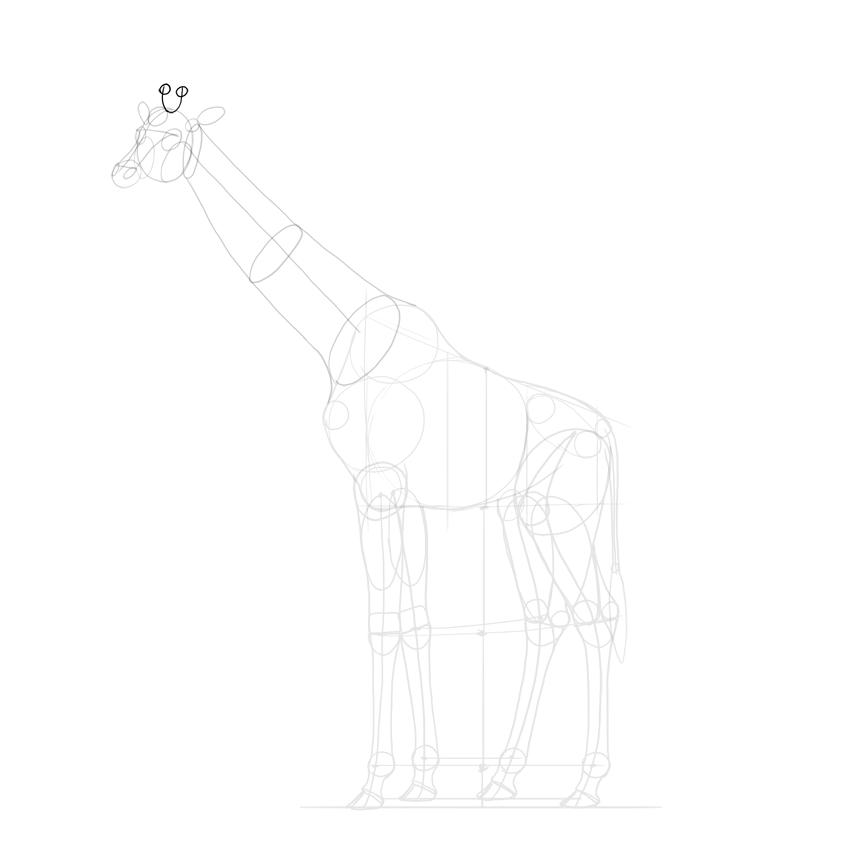 sketch giraffe horns