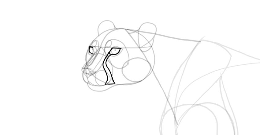 draw eyelids and cheetah marking