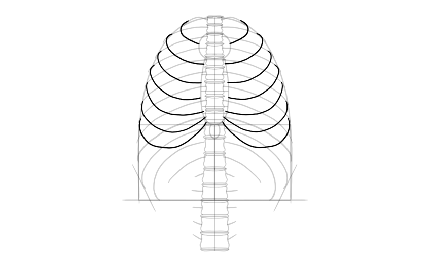 draw ribs connected to sternum