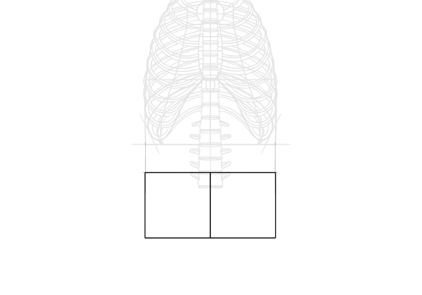 pelvis width proportion
