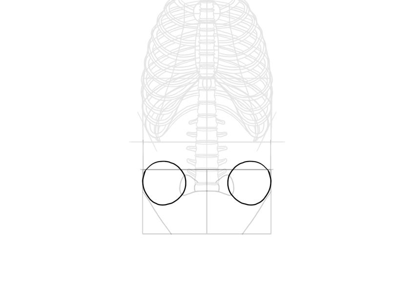 iliac crestes simplified to circles