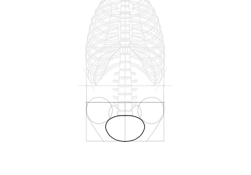 pelvis opening