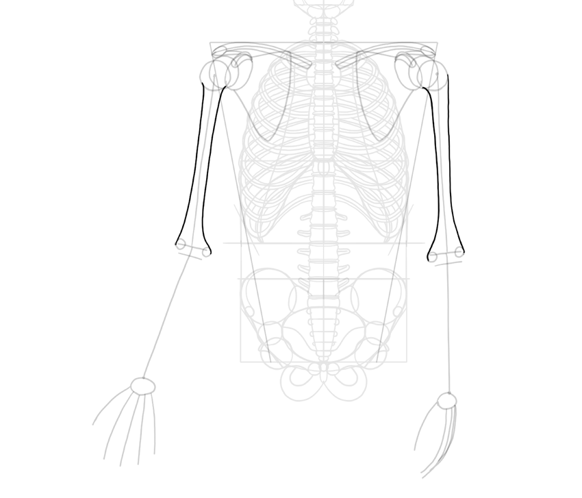 humerus outline