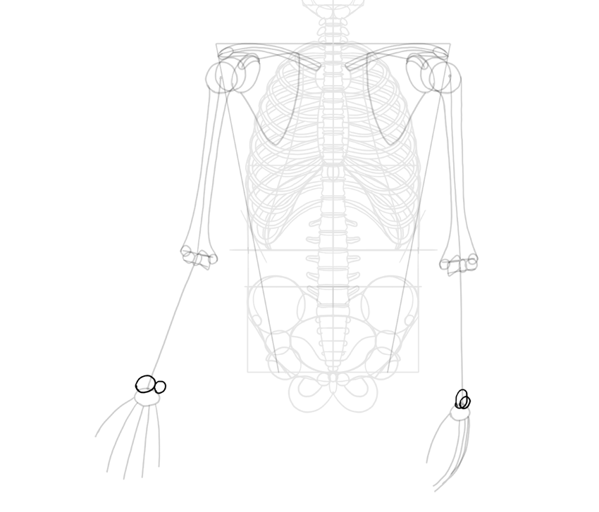 radius and ulna heads